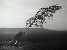 Max Von Sydow, The Virgin Spring (1960), Ingmar Bergman