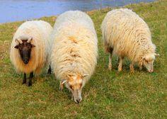Als wenskaart te koop bij  http://Josefotografie.sendasmile.com/ uit de categorie dieren.