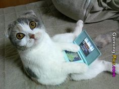 Gaming-Pics.com: cat playing video game