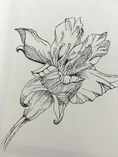 Fineliner drawing of a flower