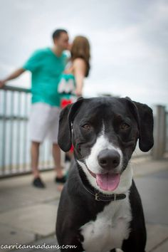 Engagement Photos with dog #detroit #michigan (Carrie Ann Adams Photography)