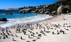 South Africa: Boulder's Beach home of the Jackass Penguins. This was my fav during a one month trip to Cape Town.