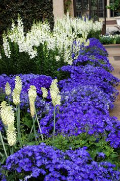 Longwood Gardens - Beautiful colors together.