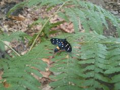 little butterfly on a leaf. it was difficult to take the picture