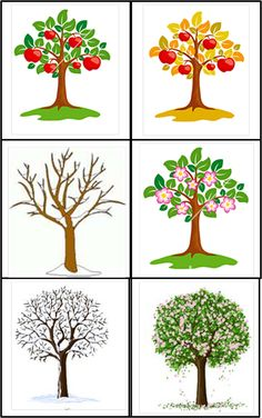 Now I have made a material about trees in different seasons. Different Seasons, Seasons Of The Year, Learn Swedish, Baby Barn, Weather Seasons, Teaching Biology, Science Activities, Science And Nature, Pre School