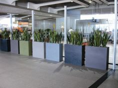 Barrier planters planted with Sansevierias