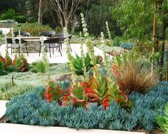 Succulent Design, Pictures, Remodel, Decor and Ideas