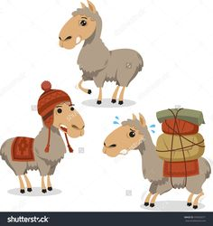 Peruvian Llama Lama with Knitted Clothes carrying luggage, vector illustration cartoon.