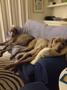 Benson & Fleur loving the heated throw rug!