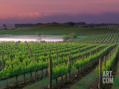 Sunrise in Distant Fog, Carnaros, Napa Valley, California, USA Photographic Print by Janis Miglavs at Art.com