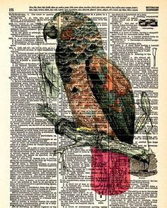 Red-Tailed Parrot  Vintage Dictionary Book by KFLGetsHerFunkOn
