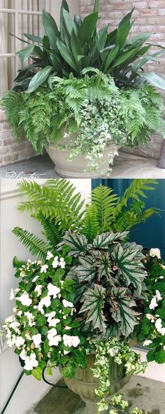 How to create beautiful shade garden pots using easy to grow plants with showy foliage and flowers. And plant lists for all 16 container planting designs! garden 16 Colorful Shade Garden Pots and Plant Lists Plant Design, Garden Design, Pot Jardin, Container Flowers, Container Plants For Shade, Succulent Containers, Planters For Shade, Plants For Containers, Garden Planters