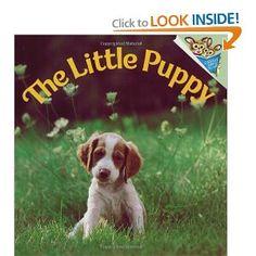 Brittany Spaniel puppy love.