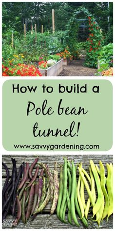 vegetable gardening: pole bean tunnels Up your garden game with a beautiful pole bean tunnel!Up your garden game with a beautiful pole bean tunnel!