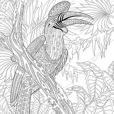Exotic Rhinoceros Hornbill Bird Adult by ColoringPageExpress