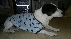 Tito posando con su camiseta de perritos!