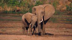 hd pics photos stunning attractive african elephants 11 hd desktop background wallpaper