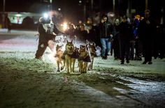 Dallas Seavey and his dogs on Front Street, Nome, Alaska