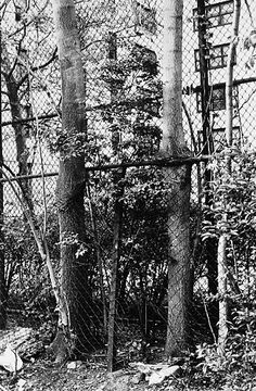 ZOE LEONARD Photographs, Surface, Flaws, Texture, Black And White, Green, Outdoor, Black White, Outdoors