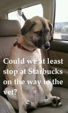 Could we at least stop at Starbucks on the way to the vet?