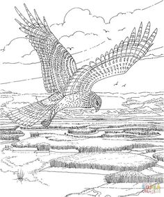 Soaring Hawk Coloring Page From Hawks Category Select 30459 Printable Crafts Of Cartoons Nature Animals Bible And Many More