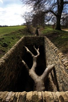 Andy Goldsworthy Hanging Trees