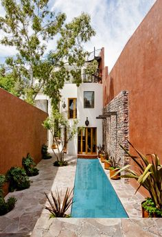 Narrow outdoor space with lots of plants