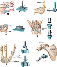 Medicine Notes, Medicine Student, Sports Medicine, Occupational Therapy, Physical Therapy, Mega Series, Anatomy Bones, Human Body Anatomy, Body Joints