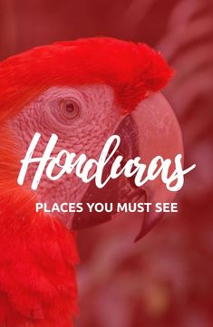 Things to do in Honduras – Not to be Missed – Best Europe Destinations Backpacking South America, Backpacking Europe, South America Travel, North America, Honduras Travel, Thailand Travel, Alberta Canada, Belize, Bolivia