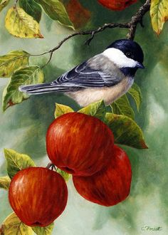 Apple Chickadee Greeting Card 2 by Crista Forest - Apple Chickadee Greeting Card 2 Painting - Apple Chickadee Greeting Card 2 Fine Art Prints and Posters for Sale Forest Art, Inspiration Art, Bird Drawings, Bird Pictures, Watercolor Bird, Bird Prints, Bird Art, Beautiful Paintings, Oeuvre D'art