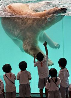 Лучшие зоопарки мира