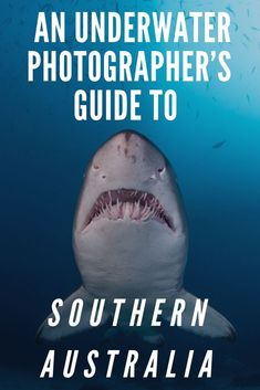 Although the Great Barrier Reef garners most of the attention when it comes to diving in Australia, Southern Australia offers delights for divers (especially photographers) as well.