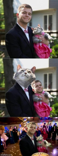 Guy Gives Up On Finding Prom Date Decides To Take His Cat Instead - Guy gives up finding prom date and decides to take his cat instead