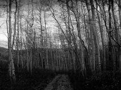 creepy, Photography by : Jennifer rogowski