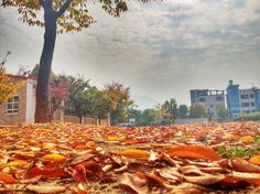 The picture that won the EPIK photo contest runner up for November! What do you think? Are you in love with Korea yet?