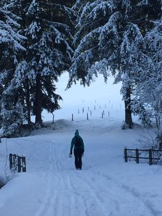 Nature, Snow, Outdoor, Outdoors, Naturaleza, Nature Illustration, Outdoor Living, Garden, Eyes