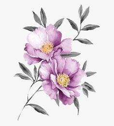 Photo about Watercolor illustration flowers in simple background. Illustration of manuscript, ground, bloom - 35681303 Illustration Blume, Watercolor Illustration, Watercolour Painting, Watercolor Flowers, Illustration Flower, Painting Flowers, Tattoo Watercolor, Flowers To Paint, Flower Illustrations
