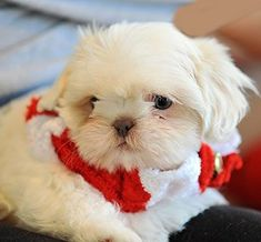 If you like this picture you can follow me yamaris ok and puppies so adorable