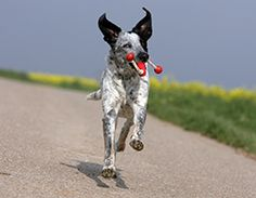 Nutrition for Canine Joint Health