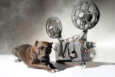 222 chien cinema television
