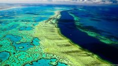 We are talking about Coral barrier reef none other than of Queensland, Australia. The historic Great Barrier Reef is one of Australia's most extraordinary natural vantage points. Species Of Sharks, Animal Species, Centro Fitness, Costa, Sea Birds, Catania, Great Barrier Reef, Nature Animals, Maldives