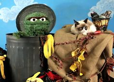 Grumpy Cat meets Oscar the Grouch Cat Heaven, Simons Cat, Oscar The Grouch, Fraggle Rock, The Muppet Show, Imagination Station, Jim Henson, Grumpy Cat, My Childhood