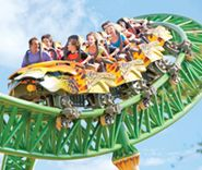 Enjoy a great day out with the family at Busch Gardens Tampa Theme Park   Florida Attractions, Animals & Thrills