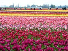paisajes hermosos de flores