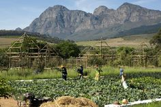 Babylonstoren, a Cape Dutch farm an hour east of Cape Town in South Africa's Franschhoek Valley South Africa Art, South Africa Tours, Cape Town South Africa, Paradise On Earth, Destination Voyage, Blog Deco, Best Vacations, Installation Art, Art Installations