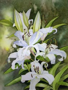 White Lily flowers, original unframed watercolour painting,
