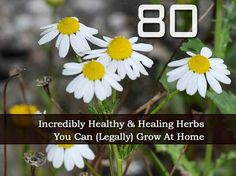 80 Incredibly Healthy And Healing Herbs You Can (Legally) Grow At Home