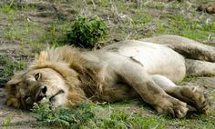 Everybody at Katuma Bush Lodge relaxes Camps, Tanzania, Lodges, National Parks, Relax, Holidays, Gallery, Animals, Cabins