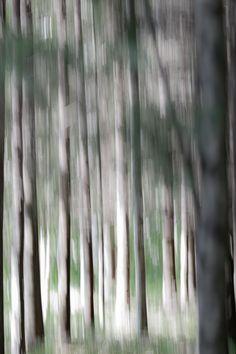 #photography #valokuvaus #maalaus #unfocused #nature #luonto #Finland #pure #puhdas luonto #wallpaper #valokuva #koivu #metsä #forest #painting