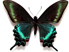 蝶たちは飛ぶ花たち - 西尾治子 のブログ Blog de Haruko Nishio:ジョルジュ・サンド George Sand